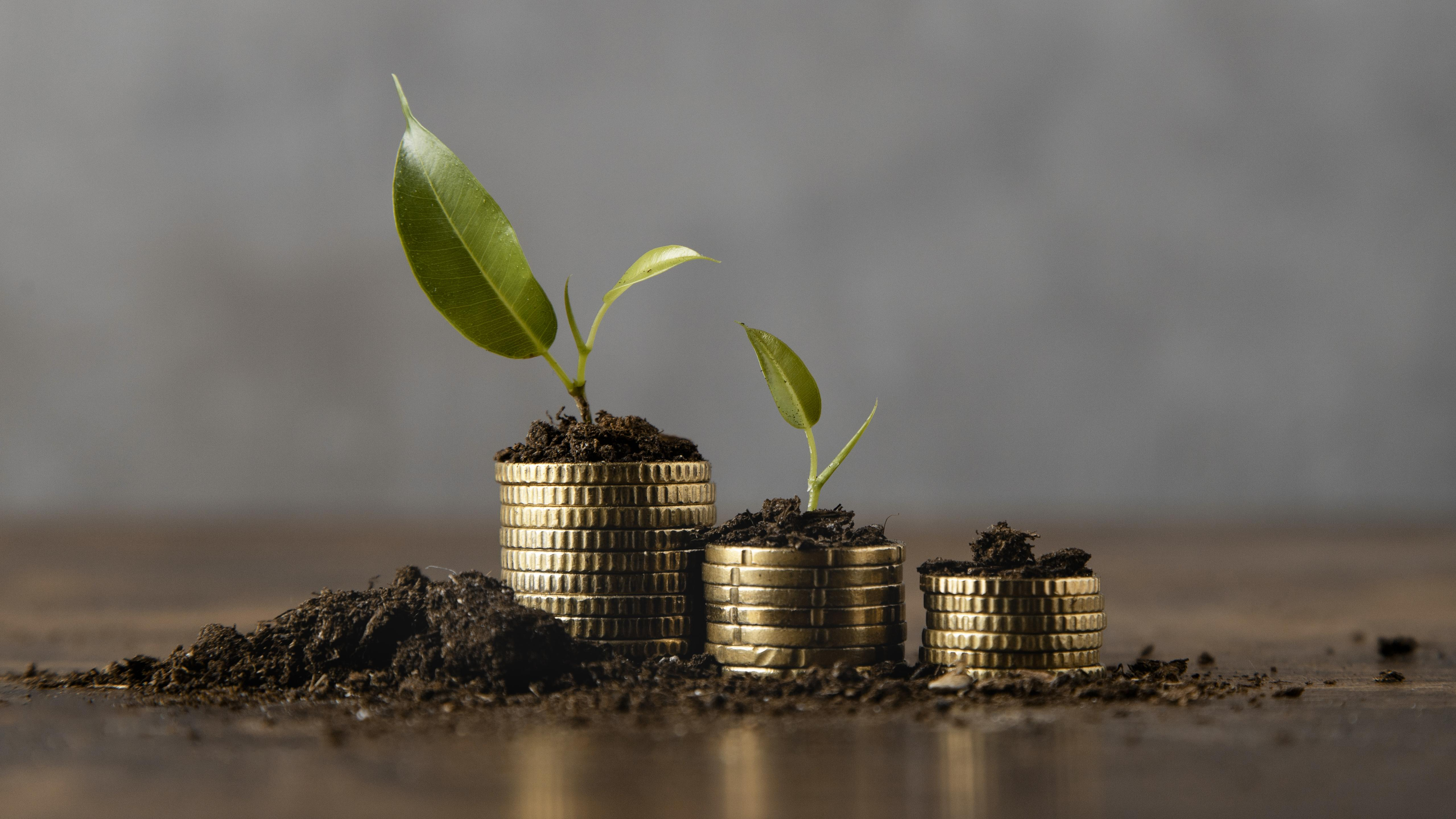 stacked-coins-with-dirt-plant